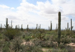 Tucson to Las Cruces (Saguaro National park)